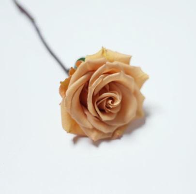 Combo Garden Rose