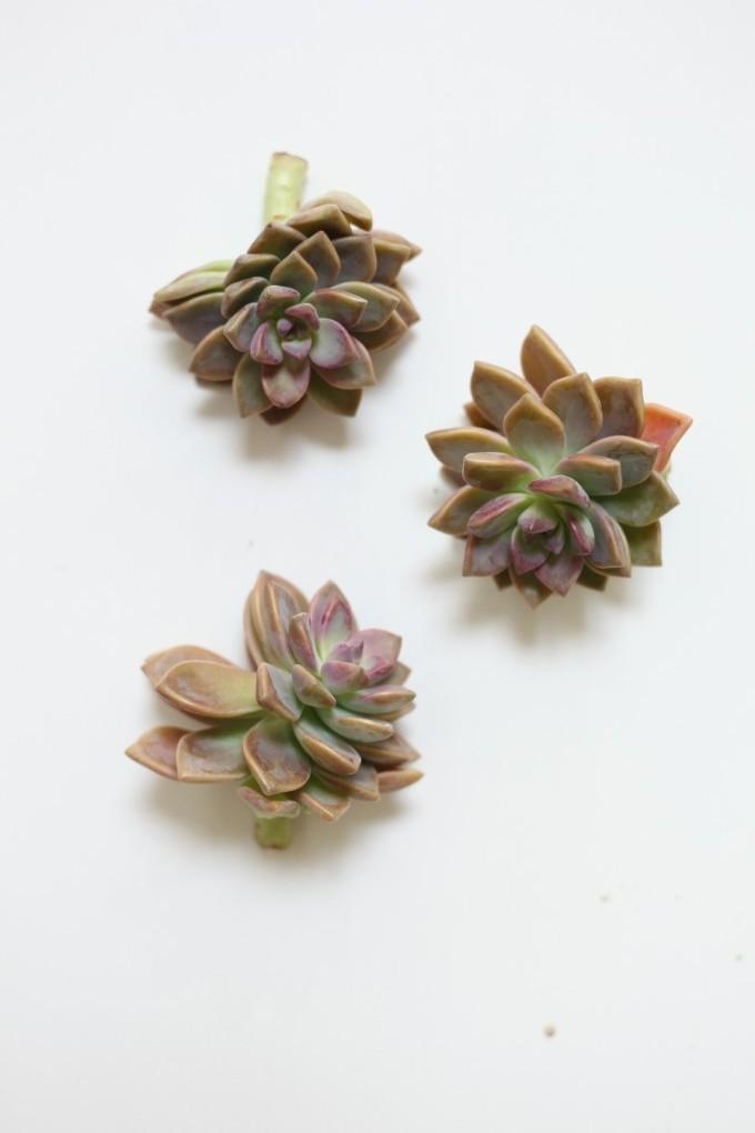 Succulents-Poppies & Posies