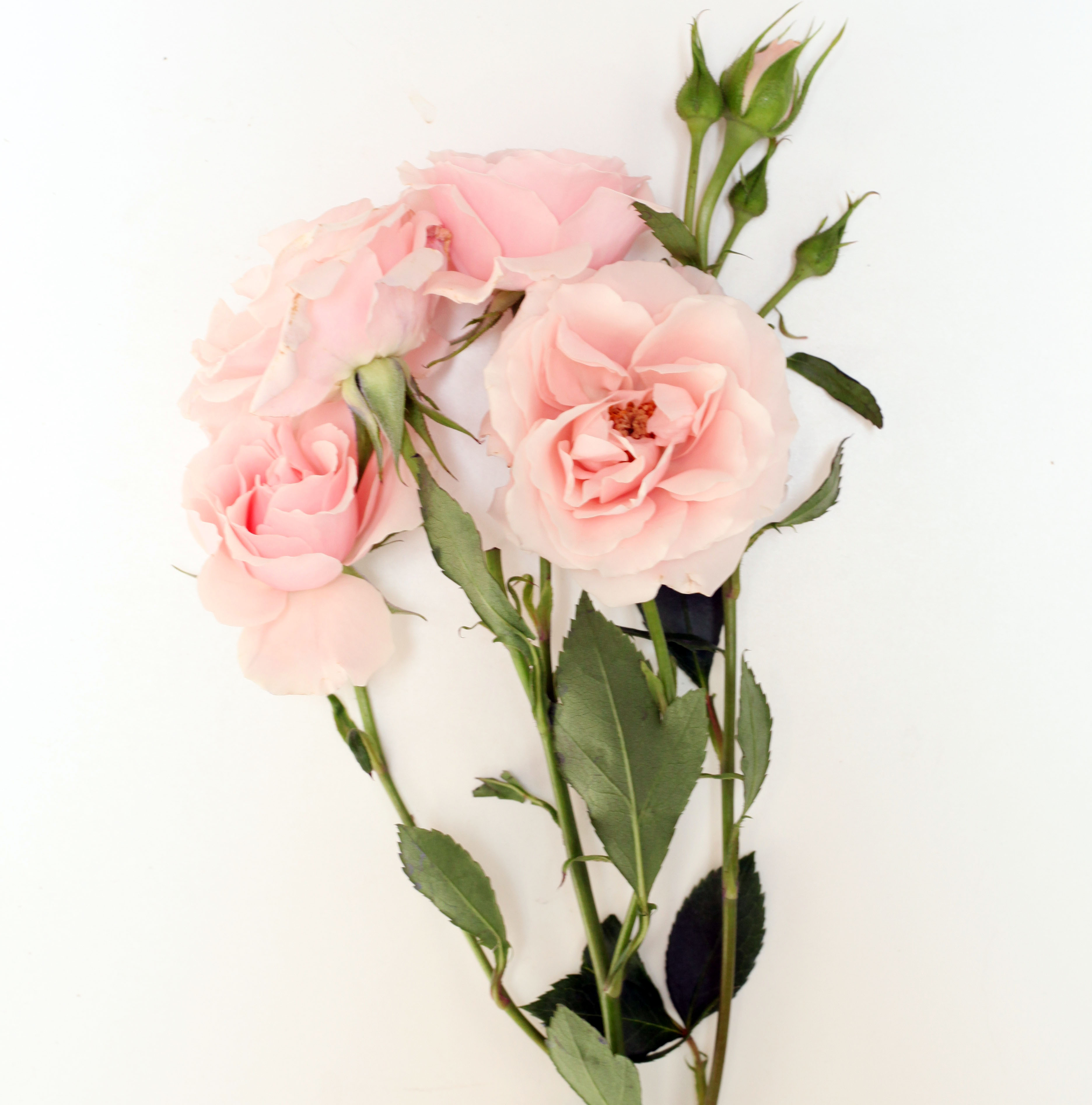 pink spray rose- poppies and posies