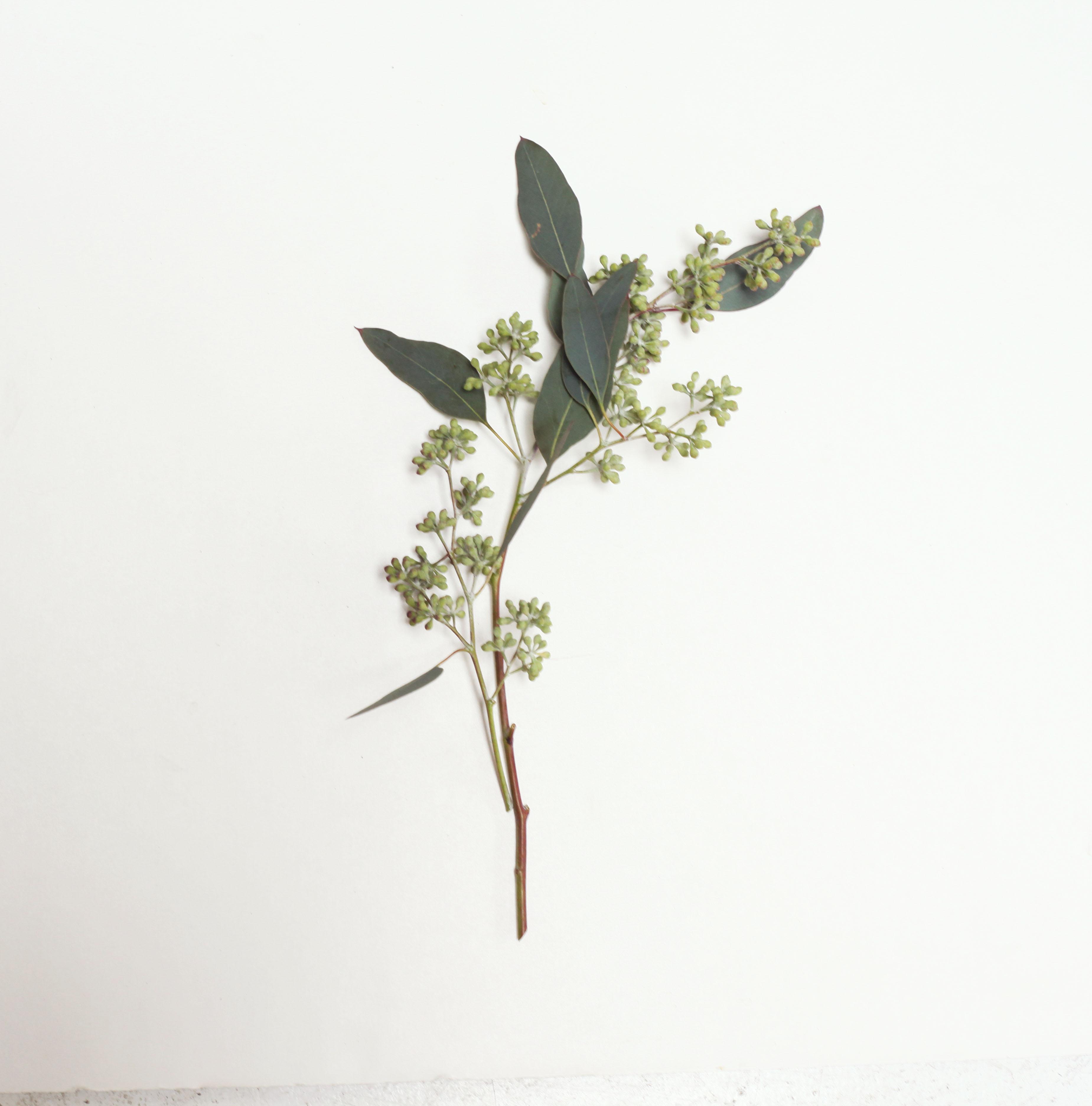 seeded eucalyptus-poppies and posies