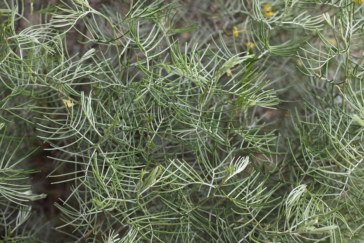 cactus, desert, arizona, tucson
