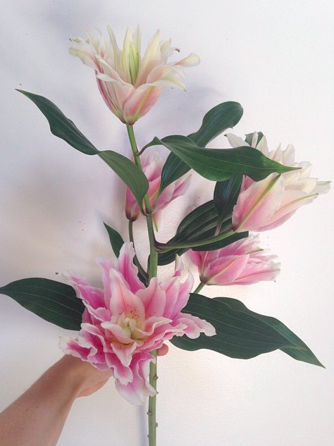double petal lily